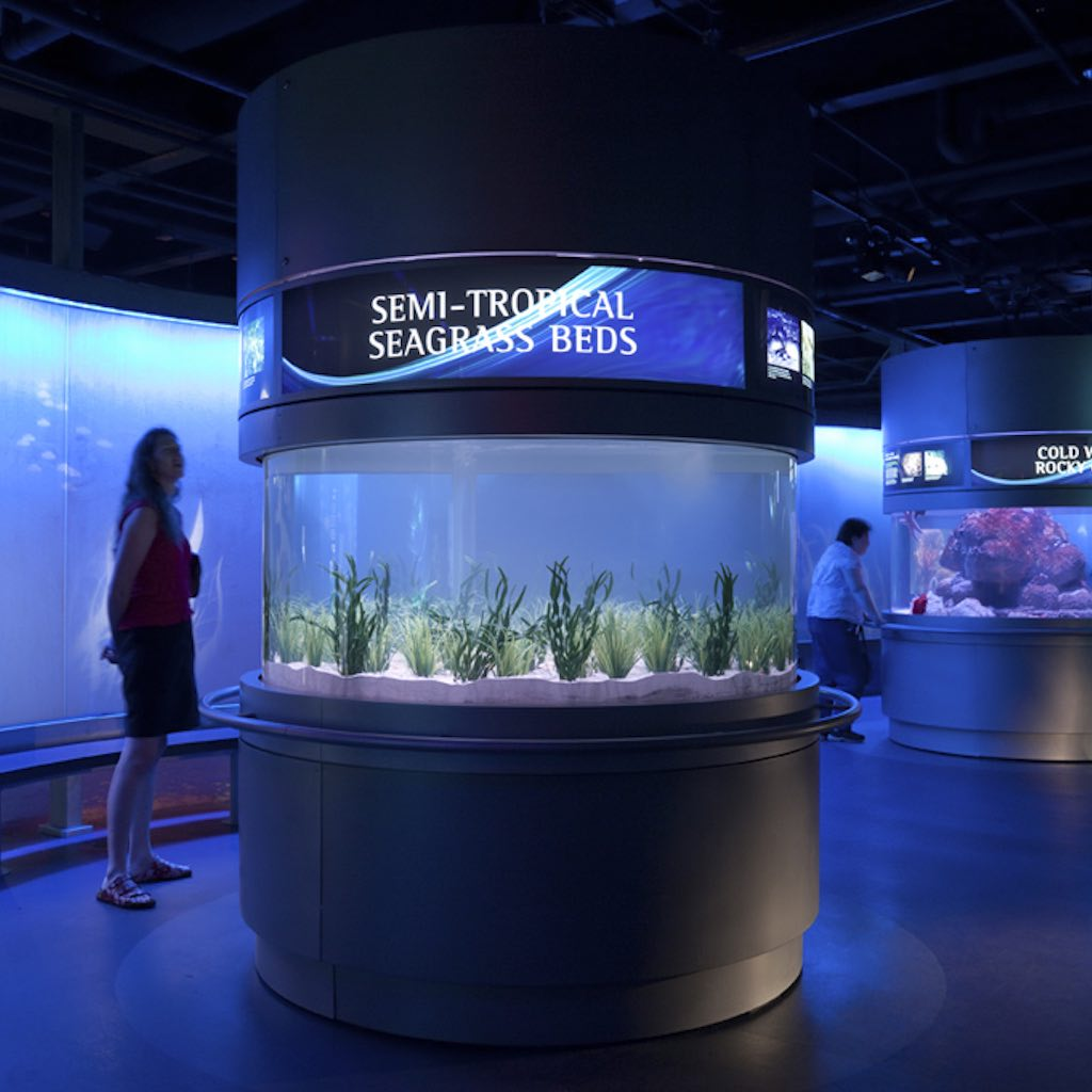 National Mississippi River Museum & Aquarium Small Tank